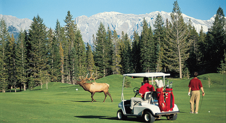 Wildlife on Banff Springs Golf Course
